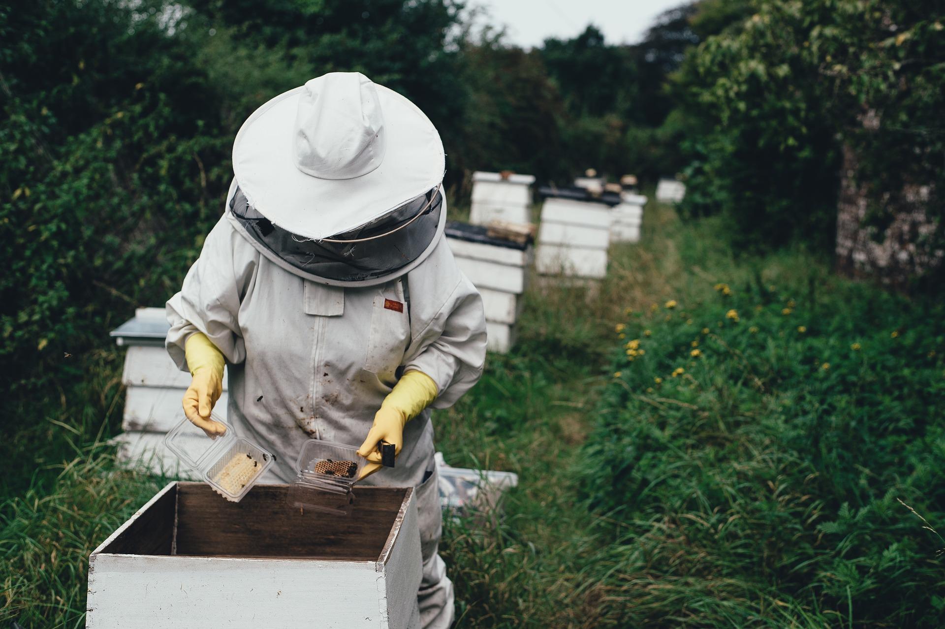 apiary-1866740_1920-1.jpg