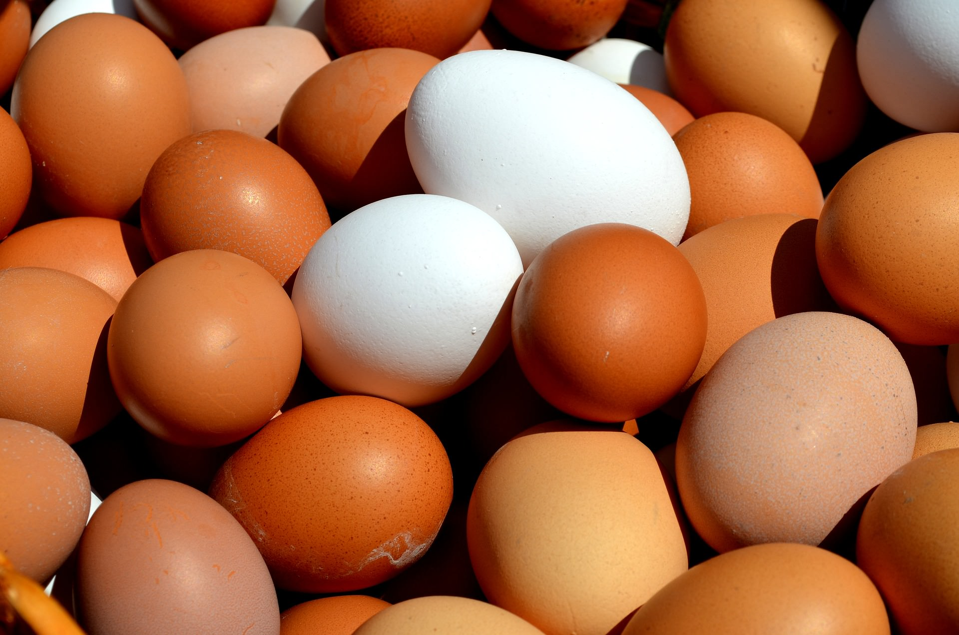egg-2580904_1920.jpg