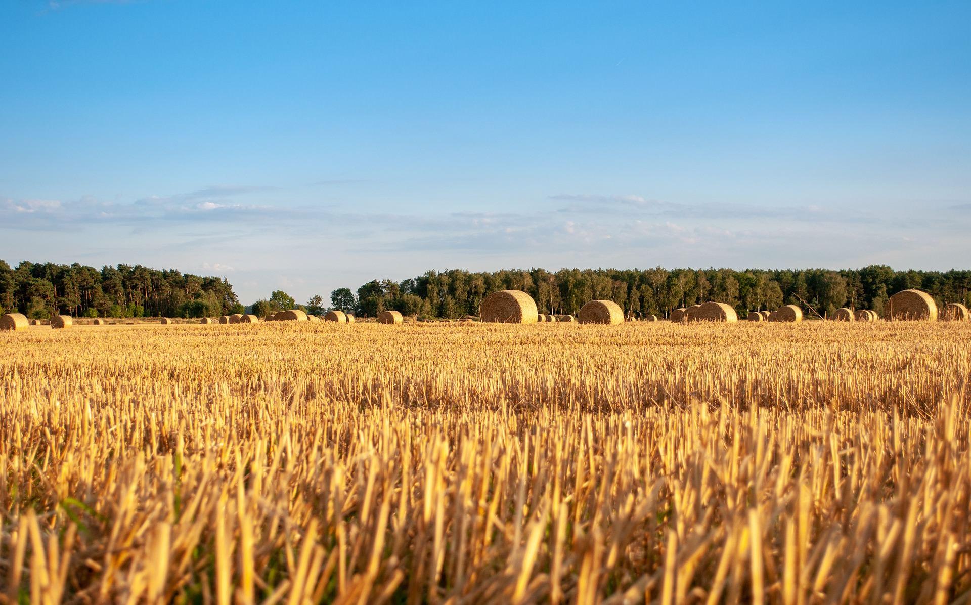 harvest-3980684_1920.jpg